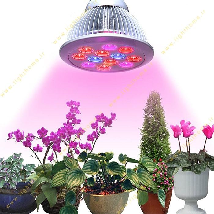 لامپ و چراغ رشد گیاه