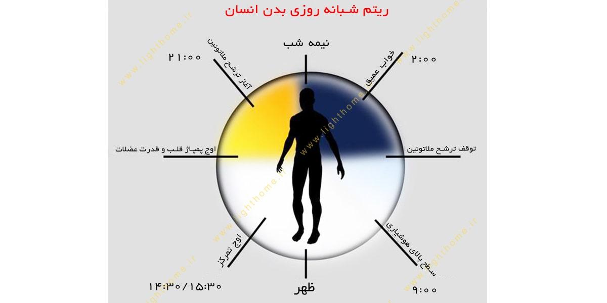 ریتم شبانه روزی بدن انسان